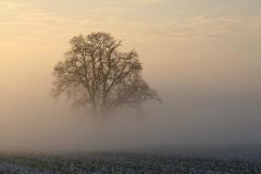 Arbre dans le brouillard