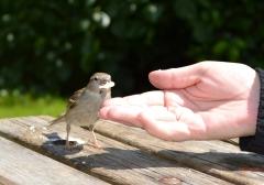 Main cherchant à apprivoiser un oiseau
