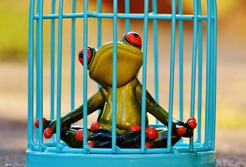 Grenouille enfermée dans une cage