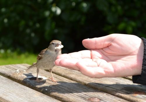 Main tendue pour apprivoiser un oiseau